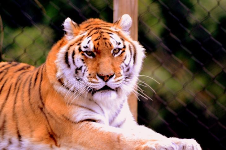Crouching Tiger, Hidden Photographer